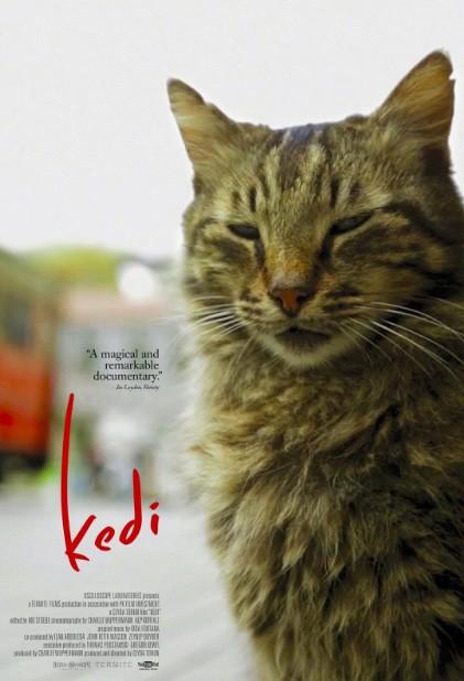 Il poster del film Kedi sui gatti di Istanbul