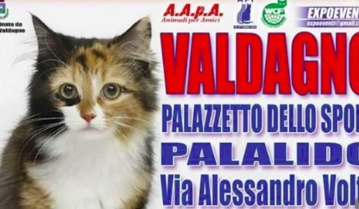 Expo Felina di Valdagno 2017