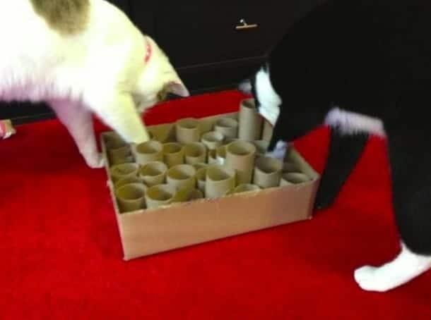 giochi intelligenti per gatto