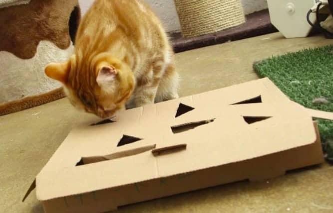 Giochi per gatti fai da te con scatole