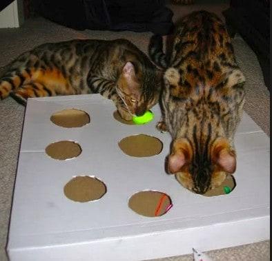 Giochi per gatti fatti in casa con le scatole