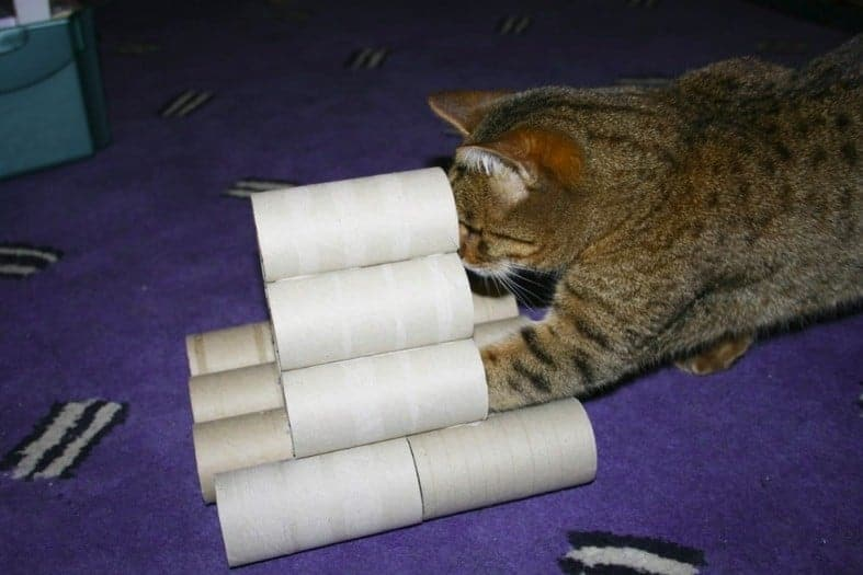 Giochi per gatti fai da te con i rotoli di carta igienica