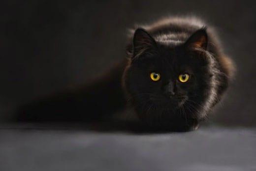 Il nome per un gatto nero