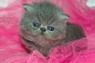 Nomi per gatti femmina