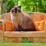 Trasloco con il gatto tutti i consigli