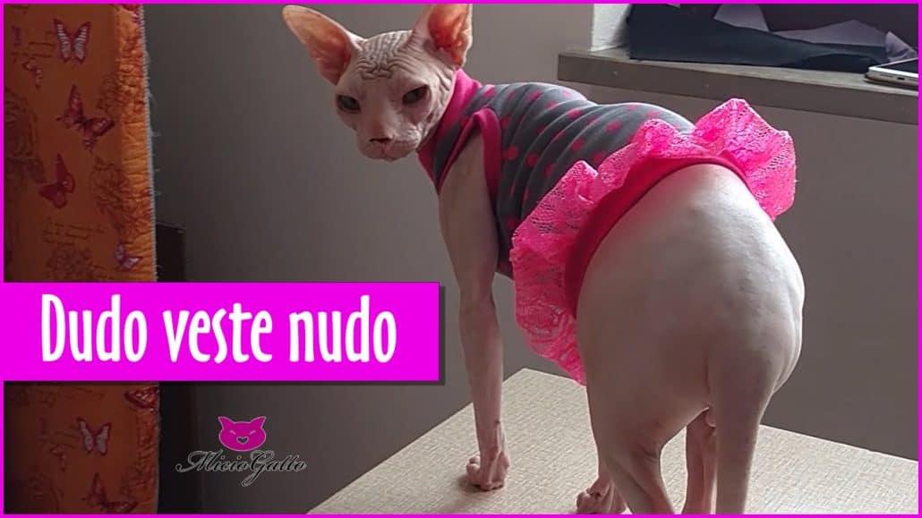 Vestiti per gatti Sphynx e non  Dudo veste nudo - MicioGatto.it 93f582d9758