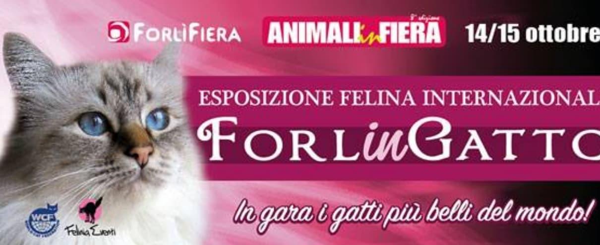 Forlingatti Esposizione Felina AGI Forli 2017