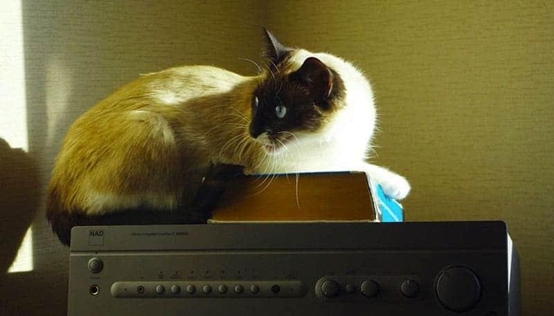 corsi e libri sulla pet therapy