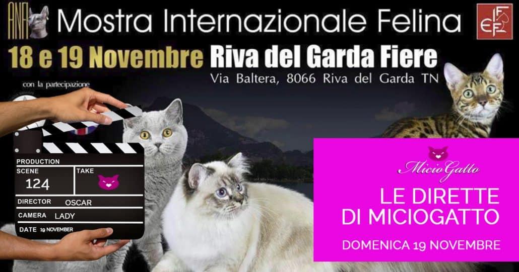 diretta Riva del Garda Expo