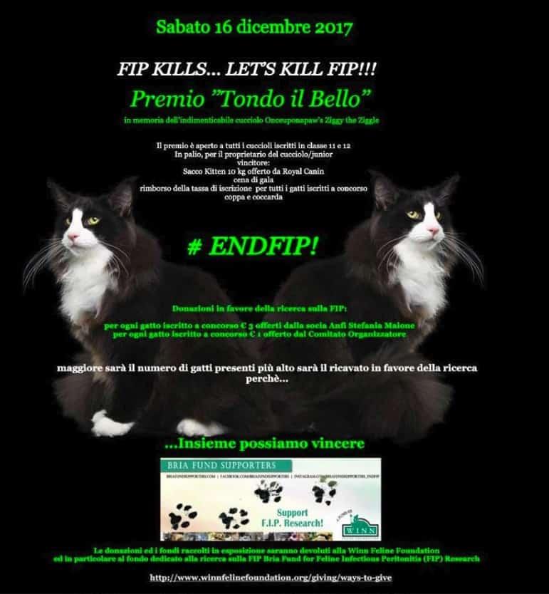 endfip esposizione felina napoli 2017