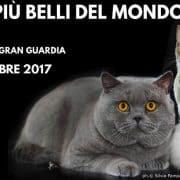 esposizione felina verona 2017