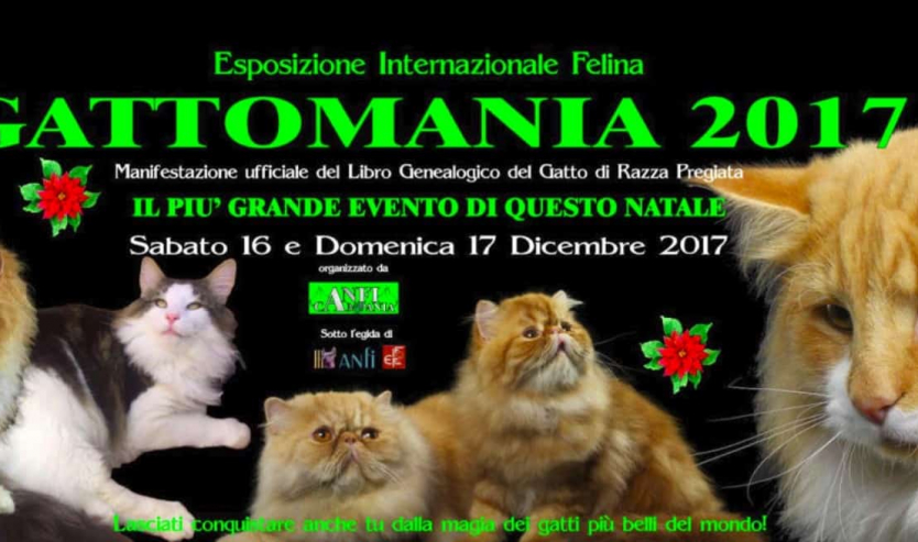 expo felina napoli 2017 gattomania