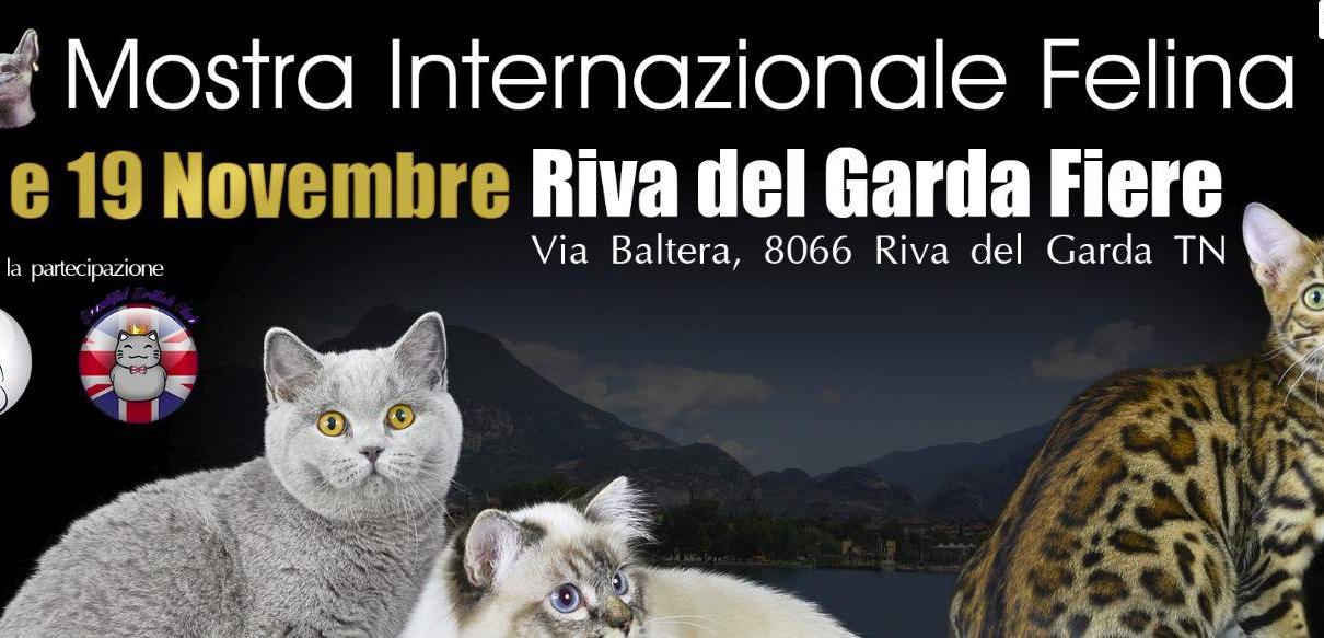 expo felina riva del garda golden cat show