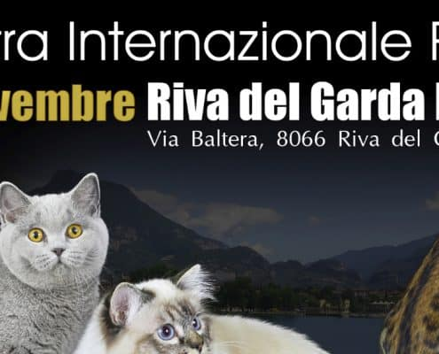 expo felina riva del garda golden cat show