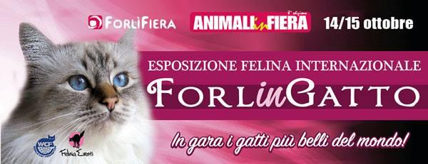 forlingatto esposizione felina agi forli