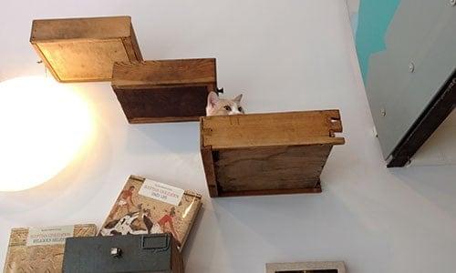 gatti mensole miagola caffe torino