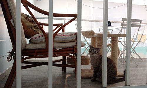 gatto e poltrona miagola cat cafe torino
