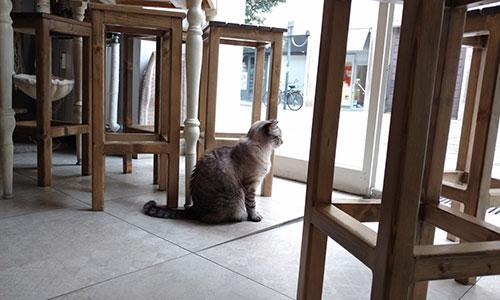 gatto guarda fuori cat caffe bistrot torino