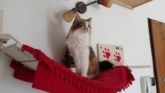 lady sulla passerella per gatti