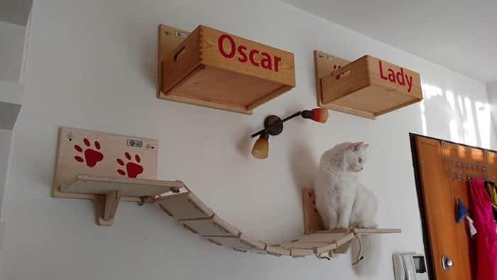 montare una parete attrezzata per gatti grazie athleticat