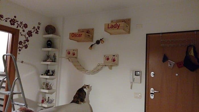 parete attrezzata per gatti montata