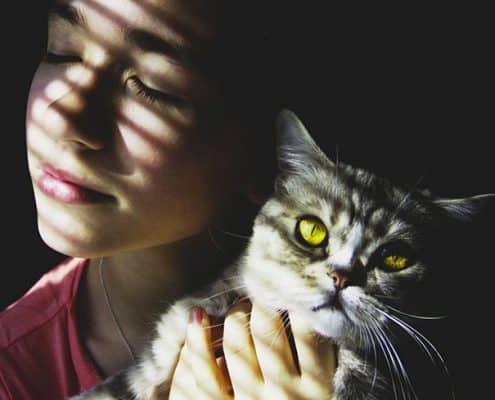 pet therapy con gatti