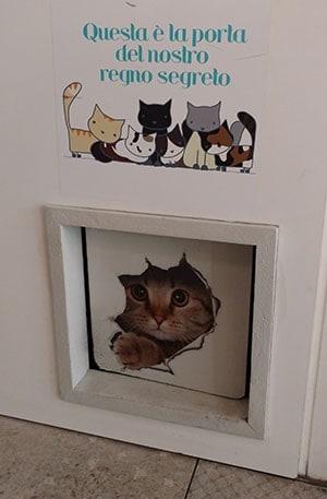 regno segreto gatti miagola caffe
