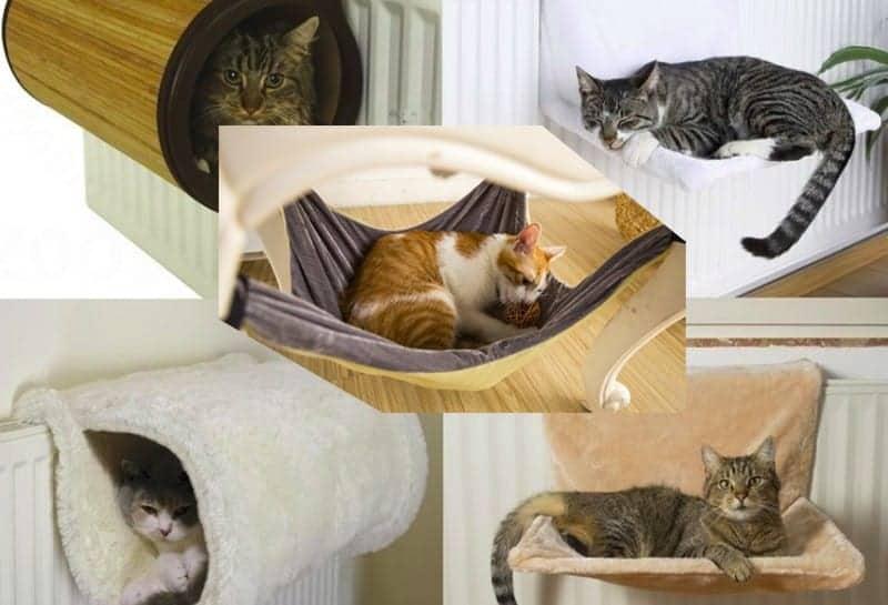 Amaca per gatti: tipologie e consigli miciogatto.it