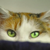 Calcoli e renella nel gatto sintomi cura e prevenzione