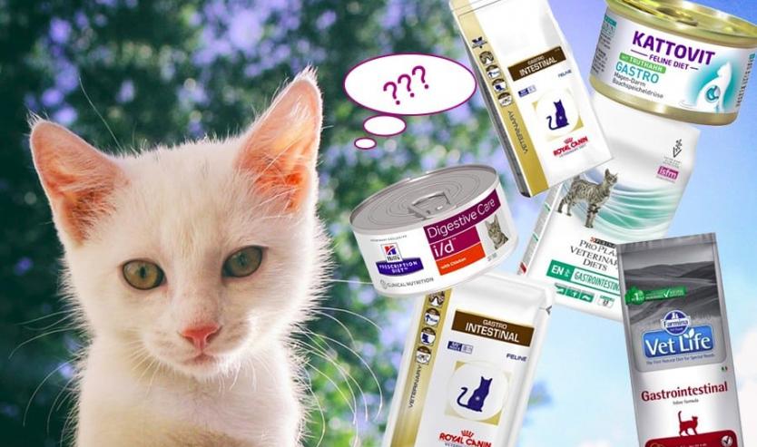 Gastro intestinal gatto opinioni marche crocchette umido