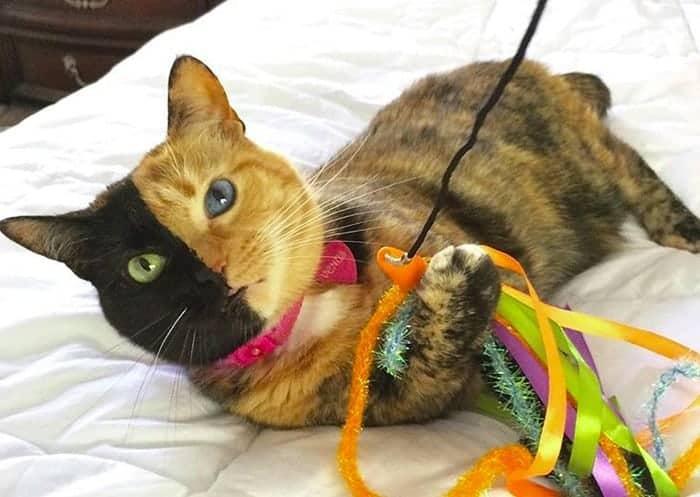 Gatti Famosi Del Web Youtube Facebook E Instagram Cats Miciogattoit