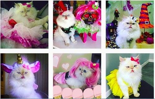 Luna The Fashion Kitty