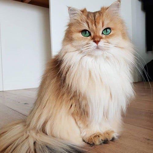 Smoothie Queen of Fluff
