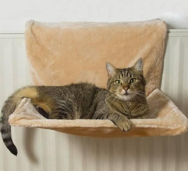 Amaca da termosifone per gatti zooplus