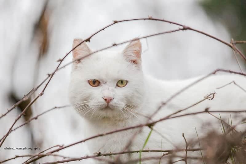 colonia felina forte marghera