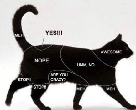 come coccolare un gatto fare grattini