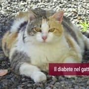 Diabete gatto sintomi diagnosi cura terapia