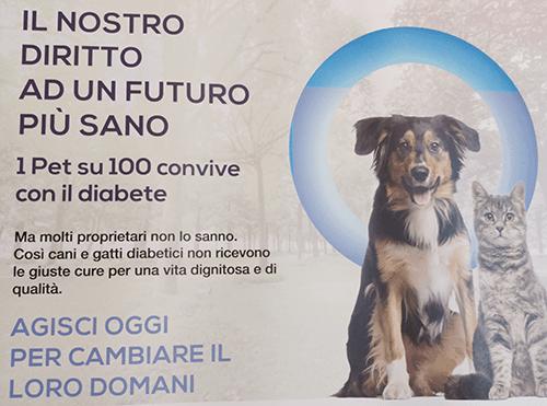 diabete nel gatto e nel cane