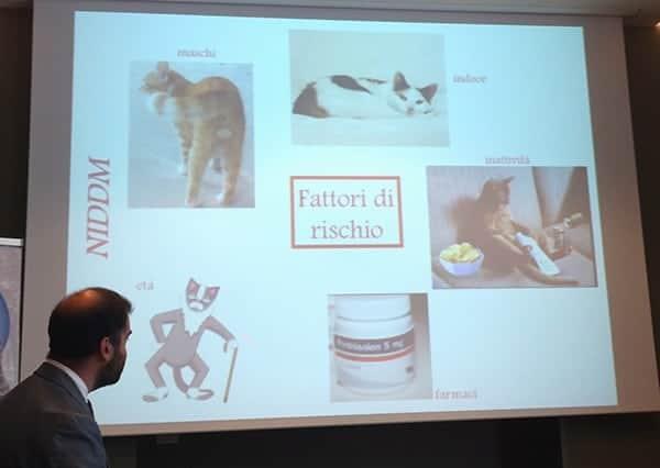 dott Fracassi spiega i fattori di rischio per il diabete nel gatto