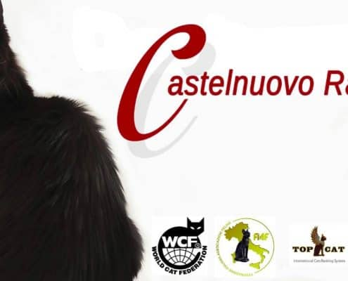 esposizione felina castelnuovo 2017
