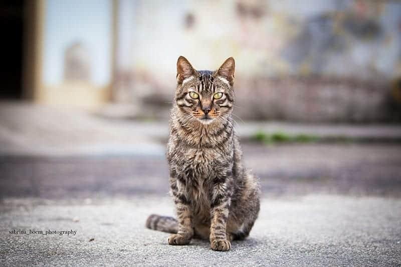 foto gatti forte marghera enpa