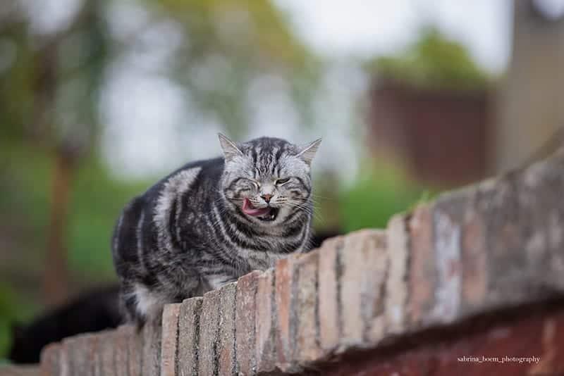 gatti di forte Marghera