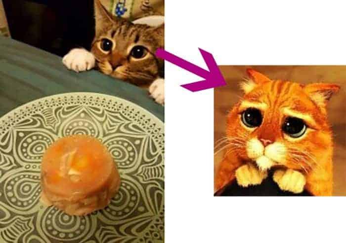 gatto e scatoletta salmone fatto in casa