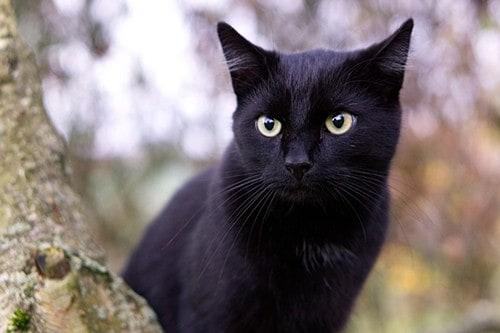 Gatto Bianco Nero per Pastori Alti Cm 30 Animali gattino Micio Pastori Presepe.