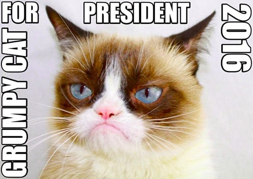 grumpy cat gatto famoso