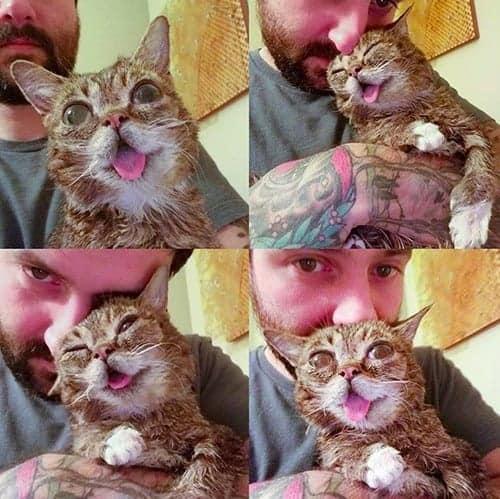 lil bub gattina