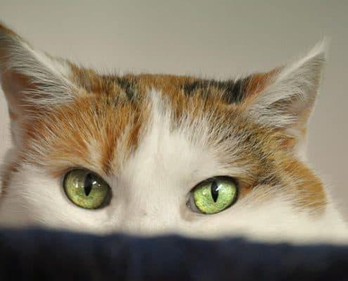 Botti dell'ultimo dell'anno e gatti che hanno paura cosa fare