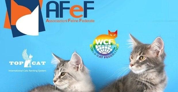 Esposizione Internazionale Felina AFEF Antegnate 2018