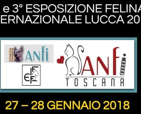 Esposizione Internazionale felina Lucca 2018
