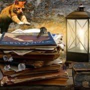 Frasi sui gatti e proverbi sui gatti solo i migliori